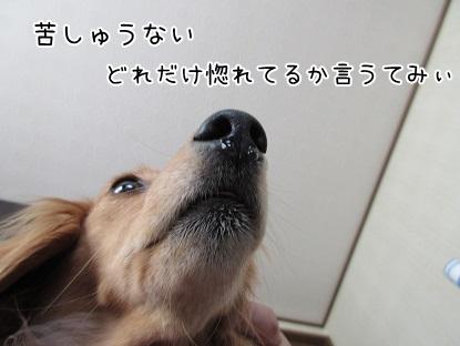 kinako4756.jpg