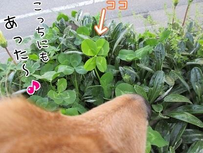 kinako4761.jpg