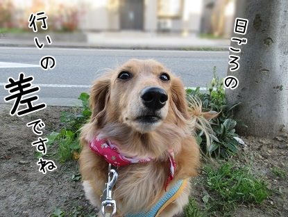 kinako4763.jpg