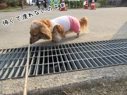 kinako4767.jpg