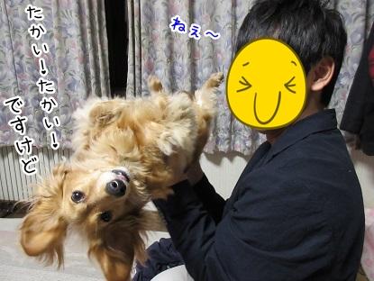 kinako4777.jpg