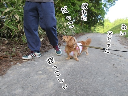 kinako4778.jpg