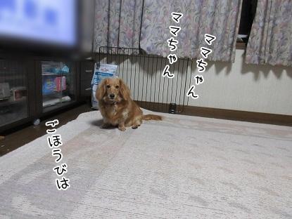 kinako4783.jpg