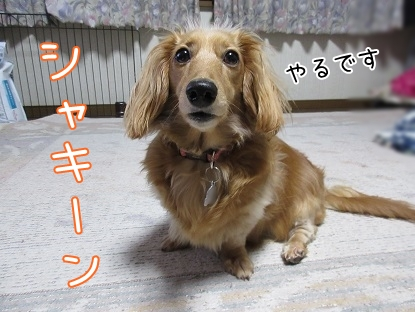 kinako4788.jpg