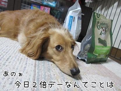 kinako4794.jpg