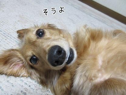 kinako4797.jpg