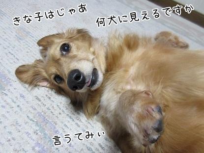 kinako4800.jpg