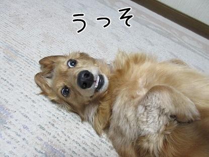kinako4801.jpg