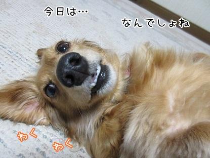 kinako4803.jpg