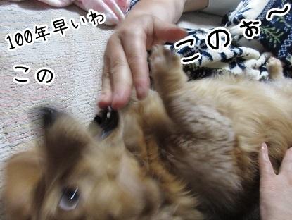kinako4810.jpg