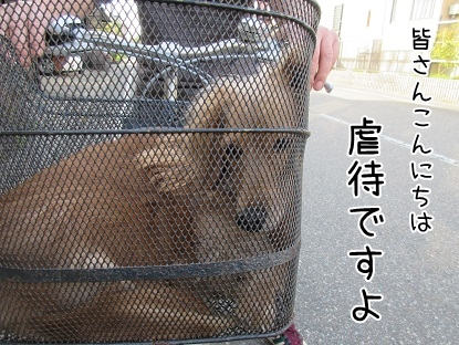 kinako4812.jpg