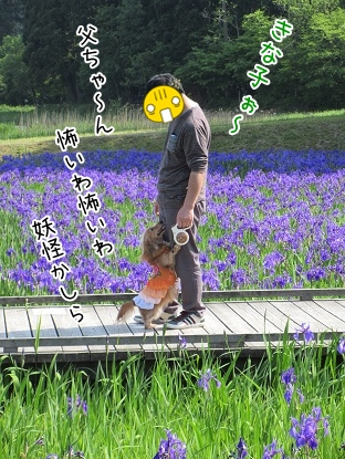 kinako4837.jpg