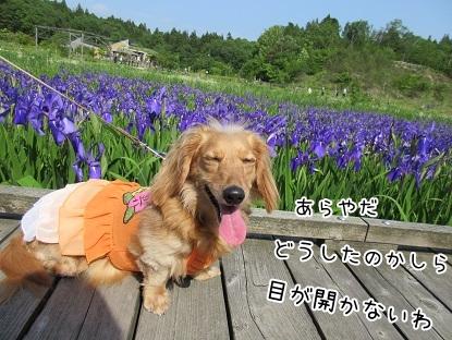 kinako4838.jpg