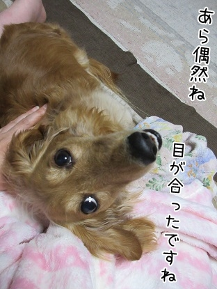 kinako4842.jpg