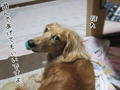 kinako4844.jpg