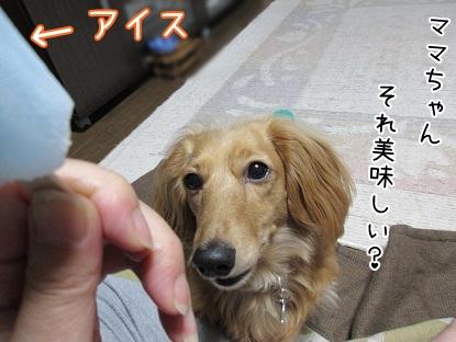 kinako4871.jpg