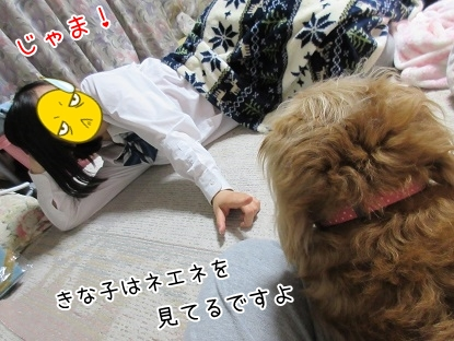 kinako4878.jpg