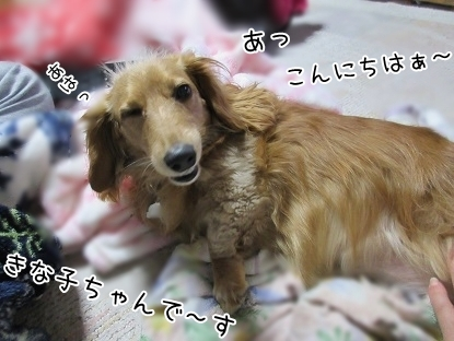 kinako4882.jpg