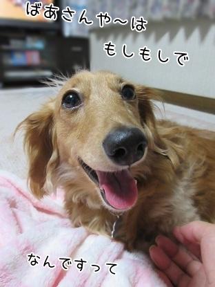 kinako4989.jpg