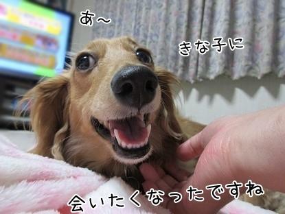 kinako4990.jpg