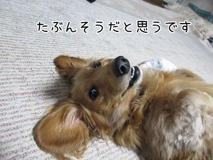 kinako4999.jpg