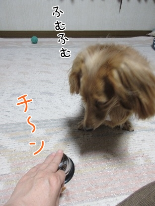 kinako5001.jpg