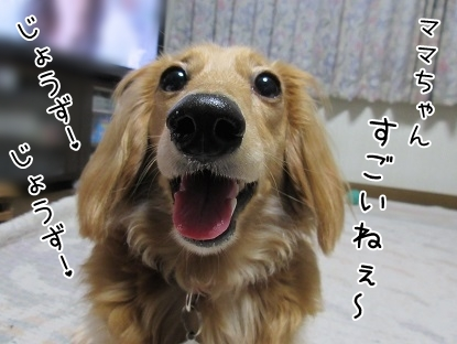 kinako5007.jpg