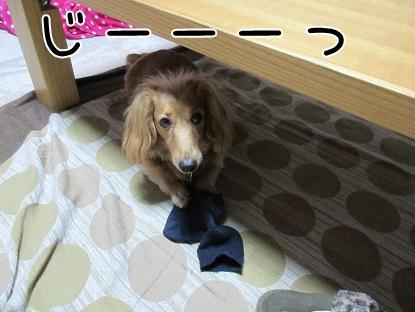 kinako5011.jpg