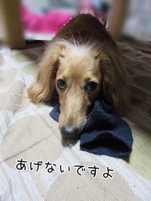 kinako5013.jpg