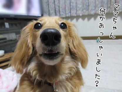 kinako5019.jpg