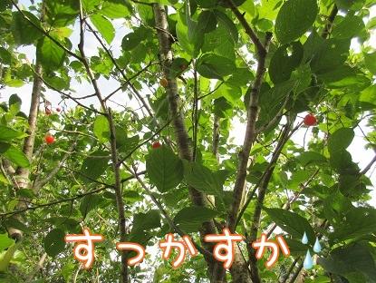 kinako5022.jpg