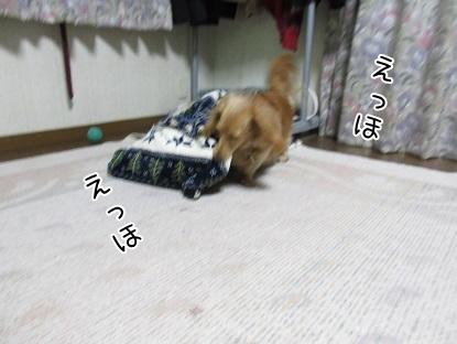 kinako5023.jpg