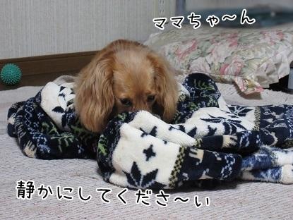 kinako5024.jpg