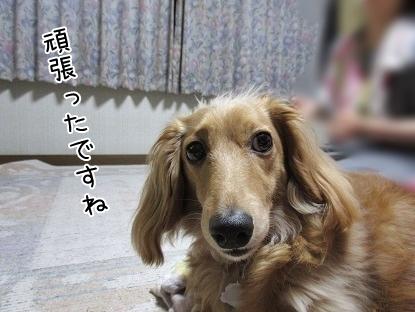 kinako5030.jpg
