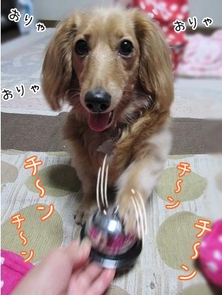 kinako5037.jpg