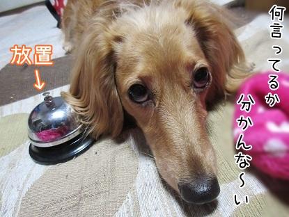 kinako5038.jpg