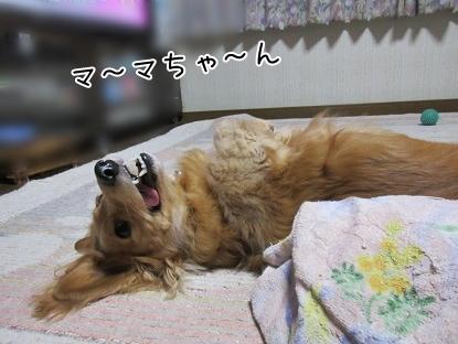 kinako5047.jpg