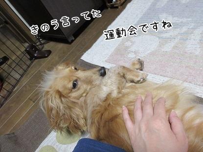 kinako5053.jpg