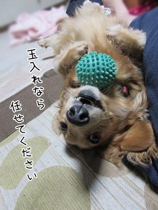 kinako5054.jpg