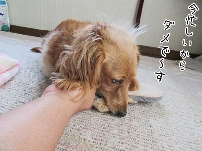 kinako5058.jpg