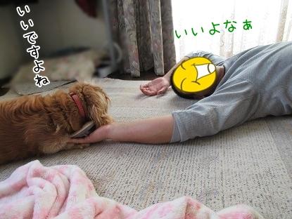kinako5060.jpg