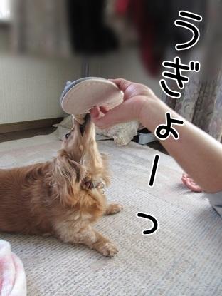 kinako5062.jpg