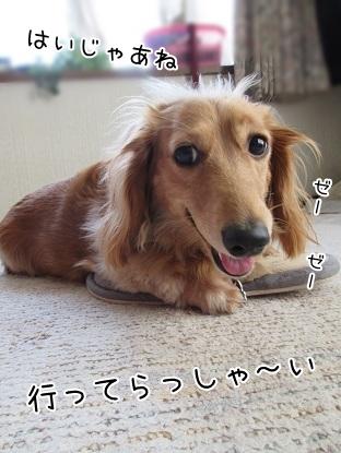 kinako5063.jpg