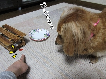 kinako5070.jpg