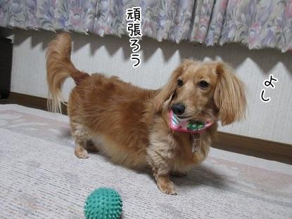 kinako5079.jpg