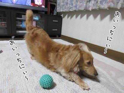 kinako5080.jpg