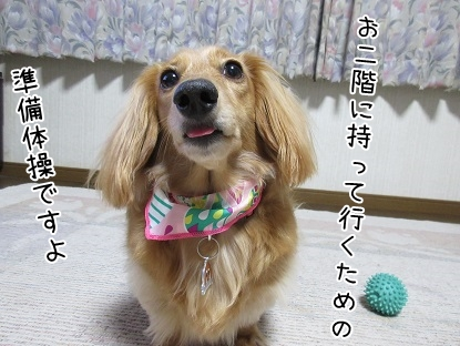 kinako5082.jpg