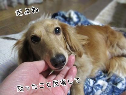 kinako5090.jpg