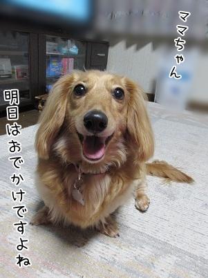 kinako5107.jpg