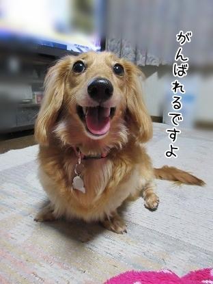 kinako5108.jpg